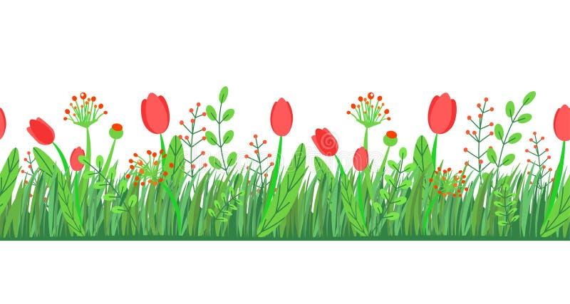 与花的春天草无缝的边界传染媒介 在白色隔绝的花卉野花春天自然植物元素 向量例证