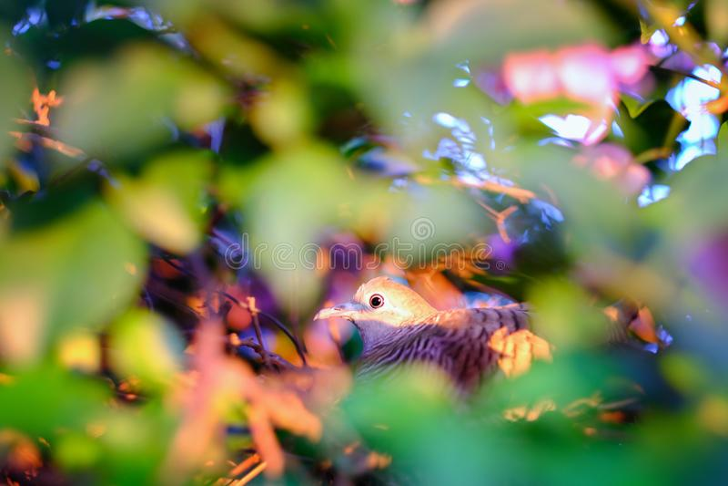 与花的特写镜头美丽的眼睛鸟, a的动物照片 库存图片