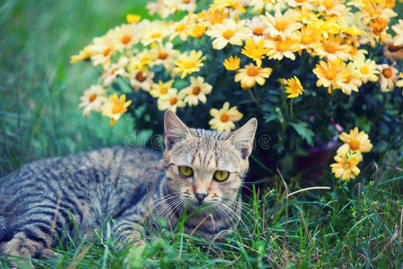 与花的猫 免版税库存图片