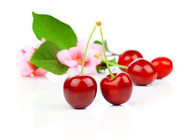与花的甜樱桃 免版税库存图片
