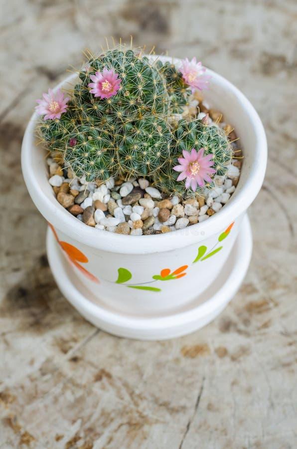 Download 与花的逗人喜爱的小仙人掌在罐 库存照片. 图片 包括有 browne, beautifuler, 植物群 - 62526182