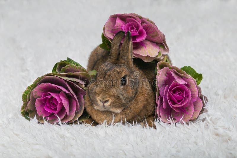 与花的逗人喜爱的棕色兔子 库存照片