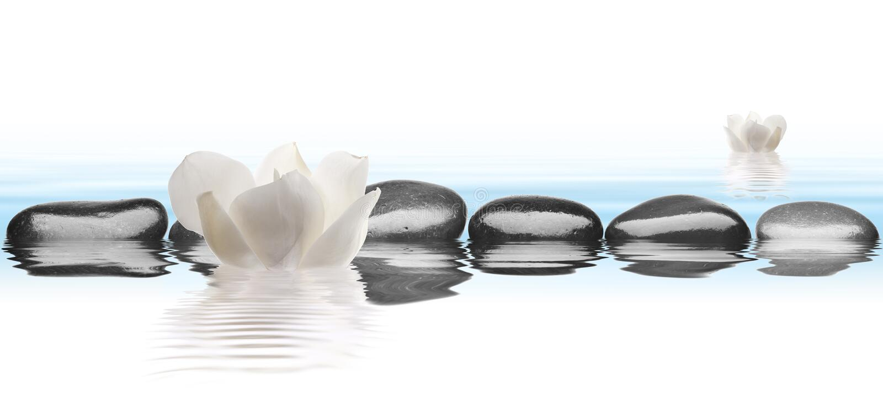 与花的黑石头在水中有白色背景 库存照片