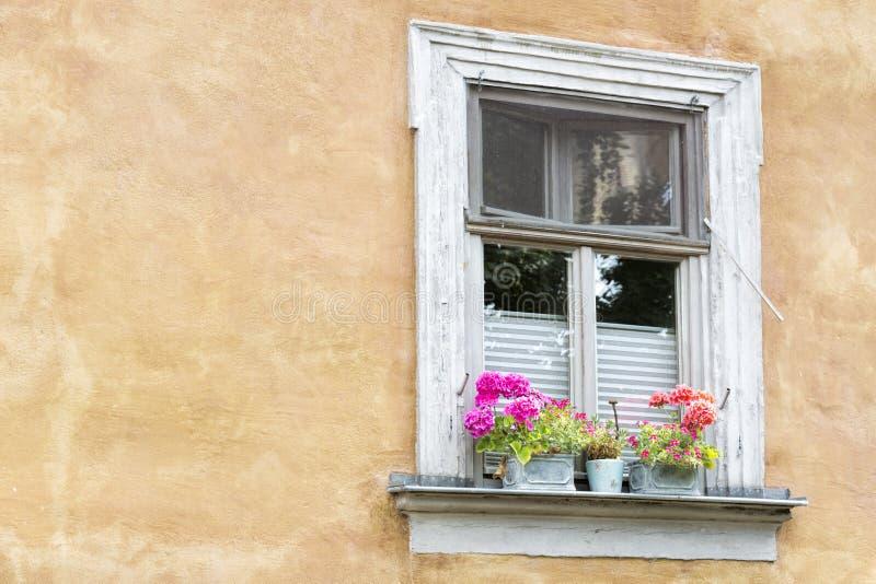 与花盆的老窗口 库存图片