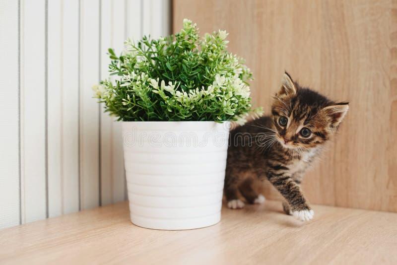 与花盆的逗人喜爱的小猫 图库摄影