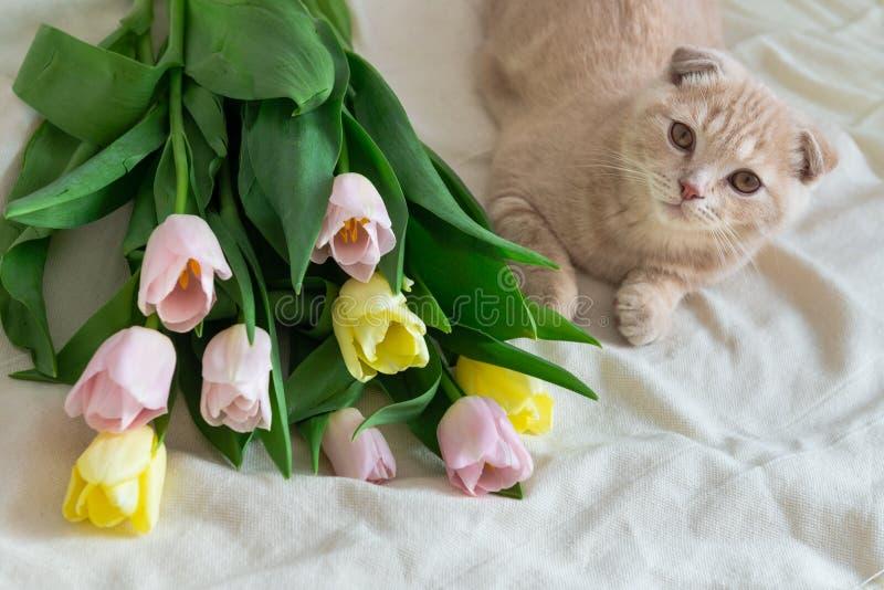 与花花束的逗人喜爱的小猫 假日概念,生日快乐 库存图片