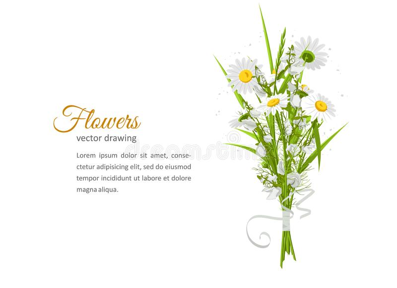 与花花束-白色camomiles的贺卡 库存例证
