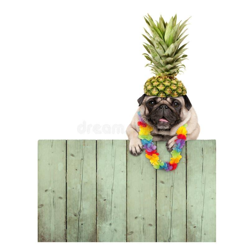 与花诗歌选的欢乐微笑的热带夏天哈巴狗小狗,垂悬与在被索还的木篱芭板的爪子 库存照片