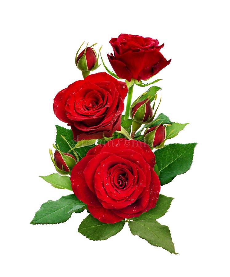 与英国兰开斯特家族族徽花和芽的浪漫安排 库存照片