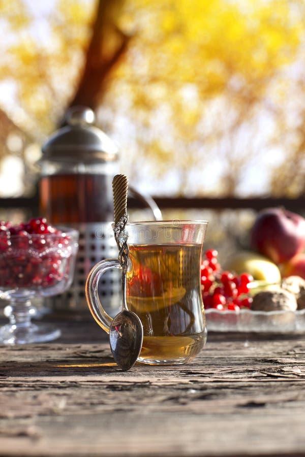与茶杯的秋天静物画在木板条和迷离树o 图库摄影