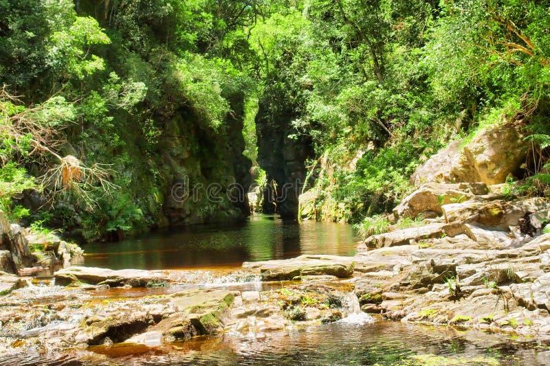 与茶水河的绿色峡谷 免版税库存图片