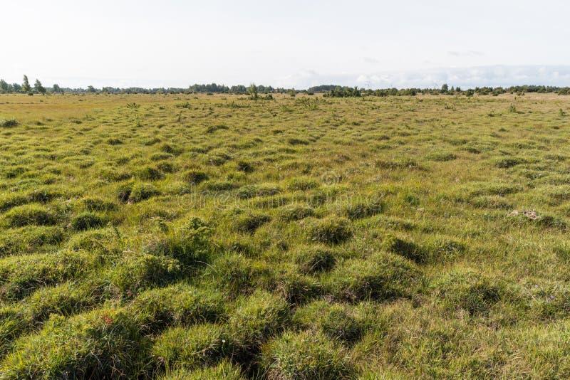 与草一束的大开风景 免版税库存照片