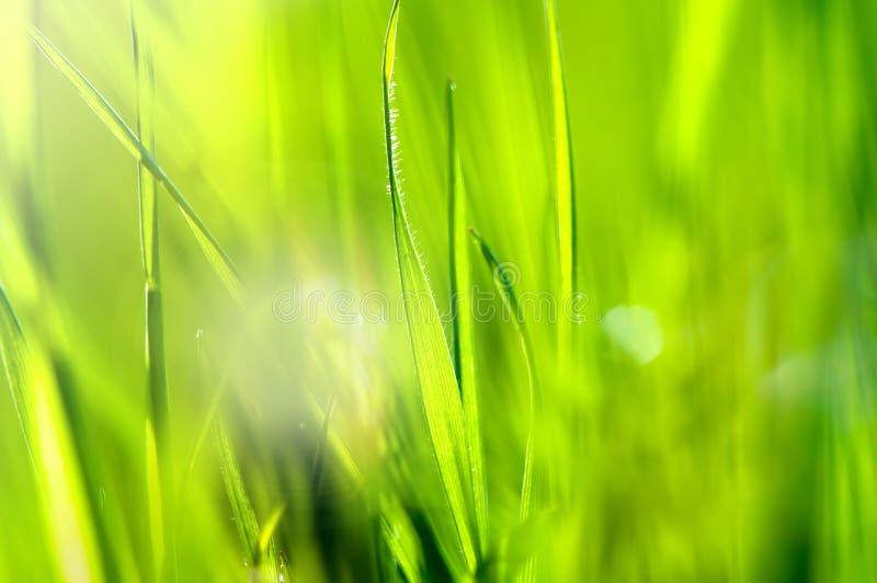 与草和太阳的春天和夏天抽象自然背景 免版税库存图片