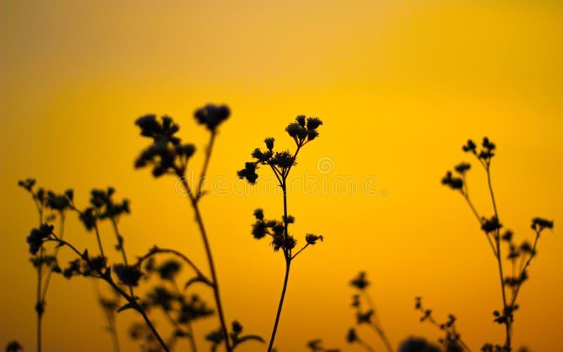 与草和日落的自然背景 库存照片