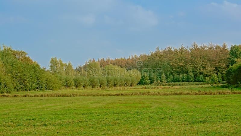 与草甸和树的绿色沼泽风景在佛兰芒乡下 免版税库存照片