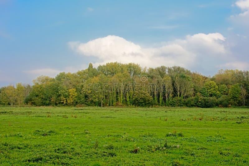 与草甸和森林的绿色沼泽风景在佛兰芒乡下 库存图片
