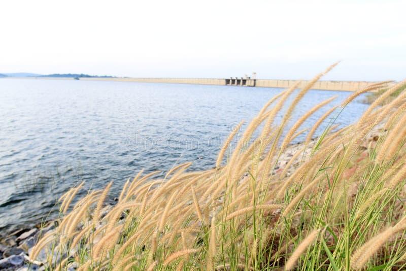 与草的春天或夏天抽象自然背景在草甸 图库摄影