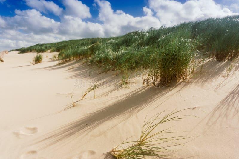 与草的沙丘在海滩 免版税库存照片