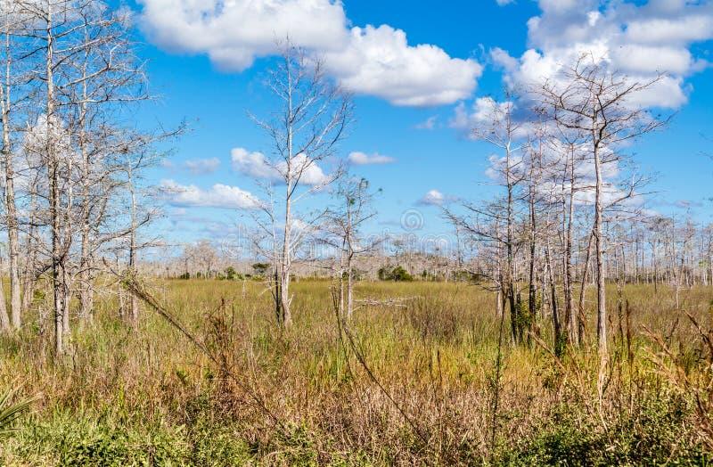 与草的沼泽和沿环路的死的树在大赛普里斯N中 免版税库存照片