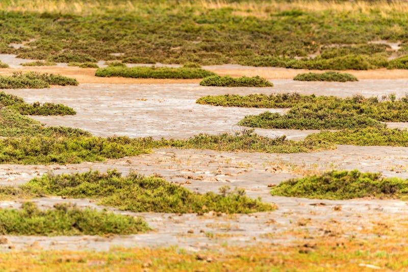 与草的盐地面 库存照片