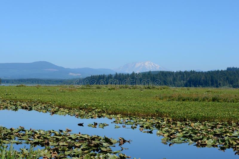 与荷花的Mt圣Helens在前景 库存图片