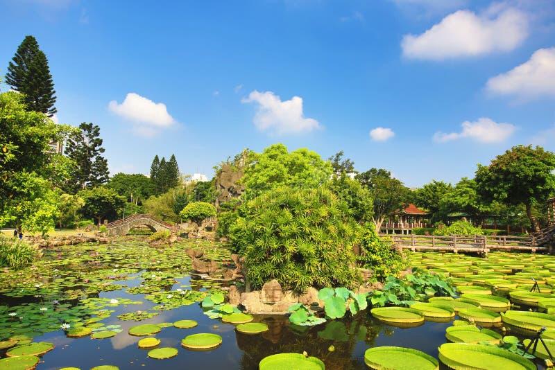 与莲花的美好的庭院风景,圣克鲁斯waterlily开花和水生植物 免版税图库摄影