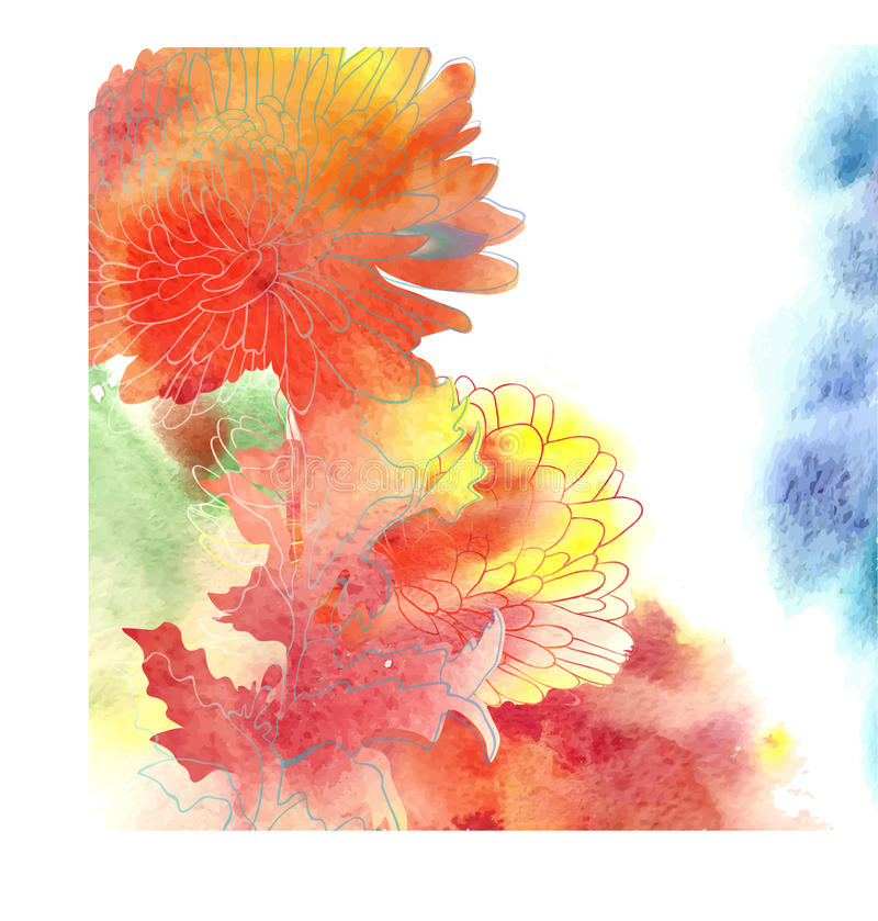 与菊花的水彩背景。 向量例证