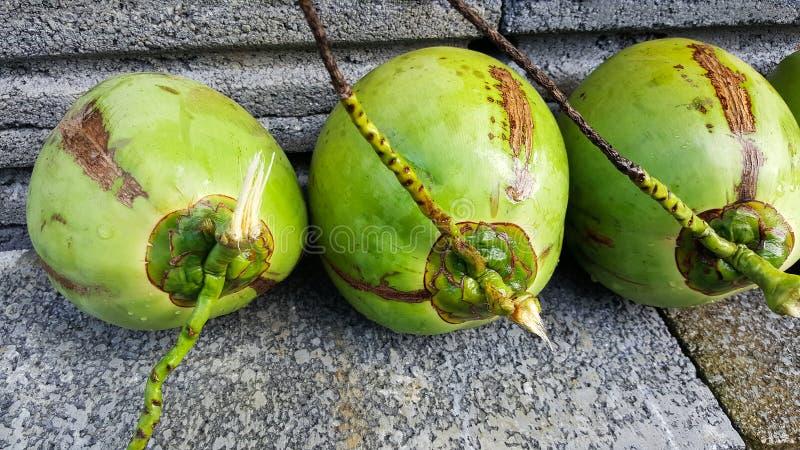 与营养素的年轻绿色椰子,保健福利,饮食小谎 免版税图库摄影
