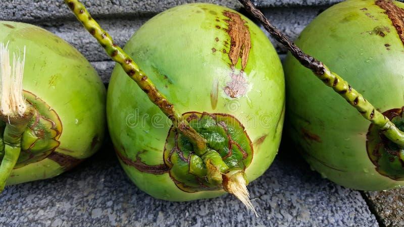 与营养素的年轻绿色椰子,保健福利,饮食小谎 免版税库存图片