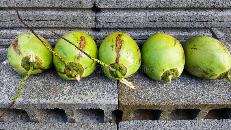 与营养素的年轻绿色椰子,保健福利,饮食小谎 库存图片
