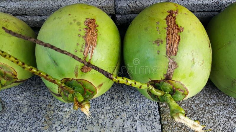 与营养素的年轻绿色椰子,保健福利,饮食小谎 免版税库存照片