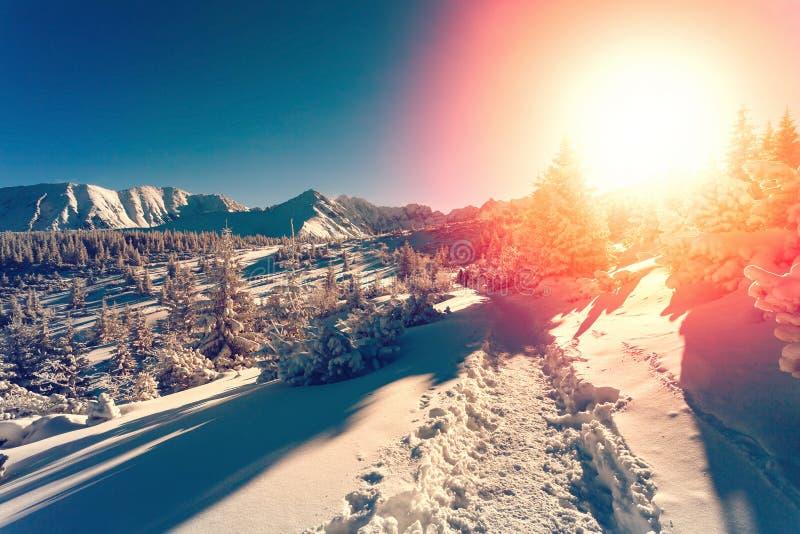 与落日的冬天风景 图库摄影