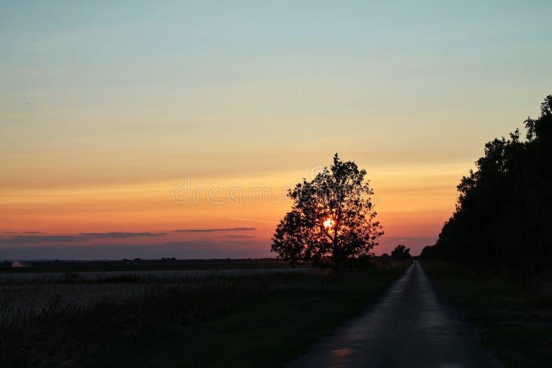 与落日的橙色天空在与乡下公路的树后 免版税库存照片