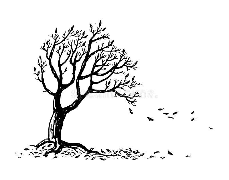与落的叶子的手拉的秋天树剪影 皇族释放例证