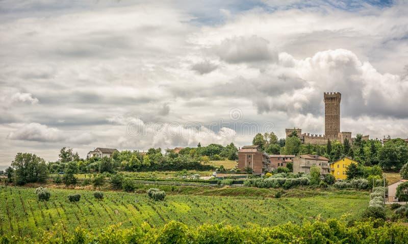 与葡萄园和橄榄色的领域在波尔托雷卡纳蒂附近在马尔什地区,意大利的农村夏天风景 免版税图库摄影
