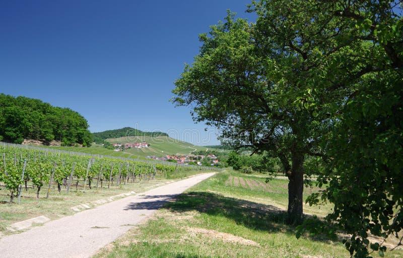 与葡萄园树领域酒村庄的风景在南德国 库存照片
