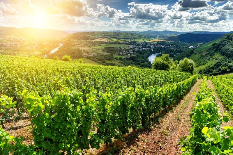 与葡萄园的美好的夏天风景 免版税库存图片