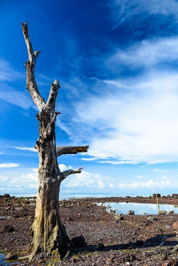 与蓝天的死的树在海滩附近 免版税图库摄影