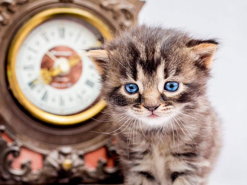 与蓝眼睛的小的小猫在时钟附近 a起点  免版税图库摄影