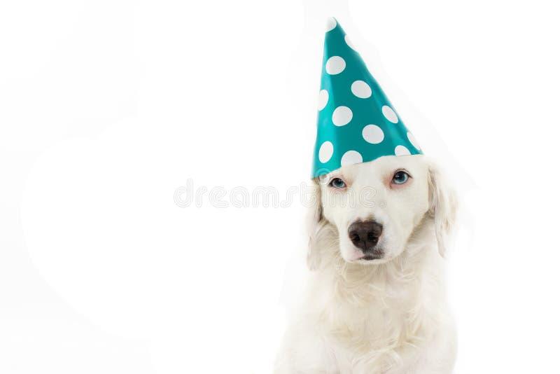 与蓝眼睛的逗人喜爱和滑稽的狗庆祝生日聚会W的 库存照片