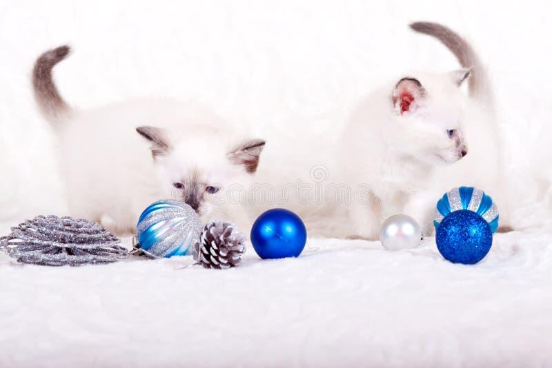 与蓝色圣诞节球的暹罗小猫 免版税库存图片