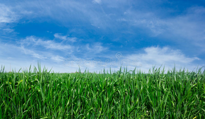 Download 绿色草坪背景 库存照片. 图片 包括有 春天, 晴朗, 视图, beautifuler, 夏天, 充满活力 - 30329674