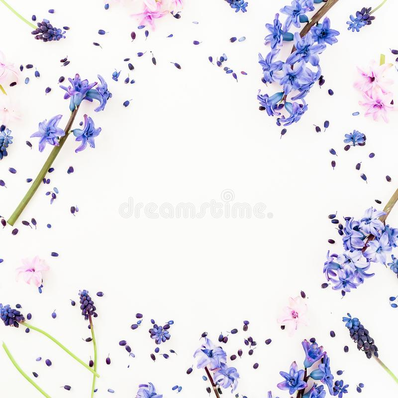 与蓝色春天花和桃红色风信花花的花卉框架在白色背景 平的位置,顶视图 红色上升了 库存图片