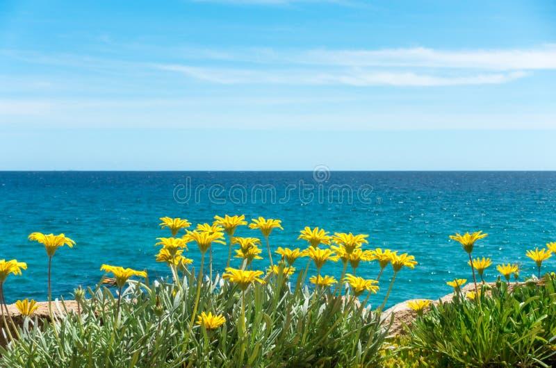 与蓝色海水和天空的黄色花 免版税图库摄影