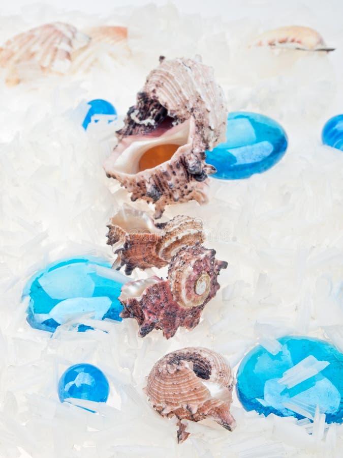 与蓝色玻璃小卵石的抽象海在白色背景的背景和壳 免版税库存照片