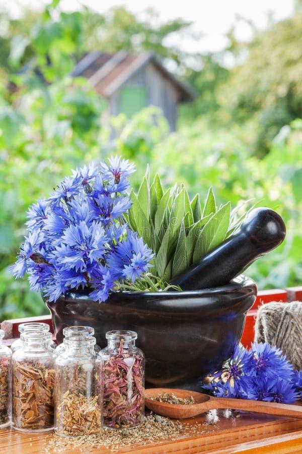 与蓝色矢车菊和贤哲的灰浆在windowsil 库存照片