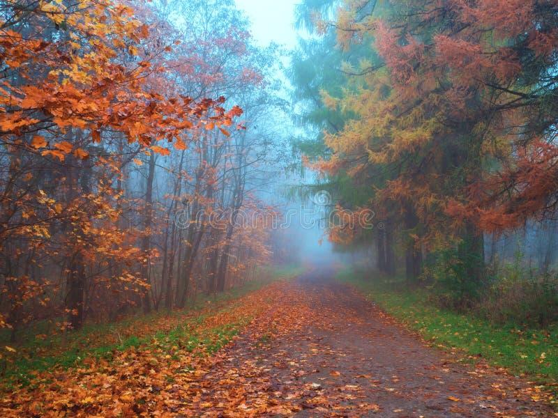 与蓝色雾的神秘的风景在秋天森林里 库存图片