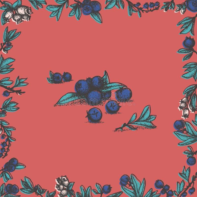 与蓝莓叶子和开花的蓝莓花卉框架 向量例证