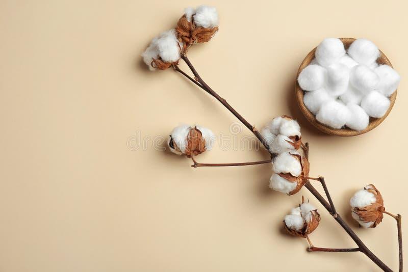 与蓬松花和棉花球的分支在颜色背景,平的位置的碗 免版税图库摄影