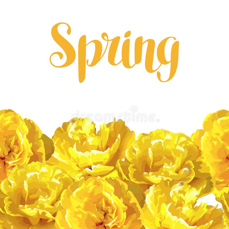 与蓬松黄色郁金香的无缝的样式 美丽的现实花和芽 皇族释放例证